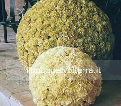 Il Bouquet Volterra