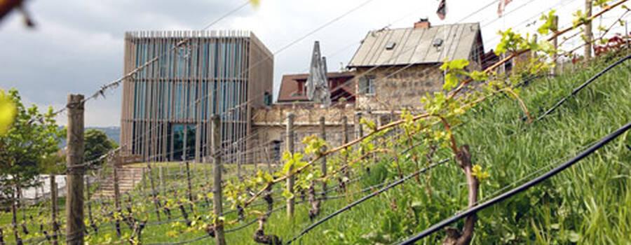 Beispiel: Das Gut, Foto: Weingut am Stein.