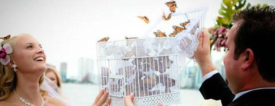 Mariposas y eventos, empresa que ofrece servicios de liberación de mariposas en la Ciudad de México