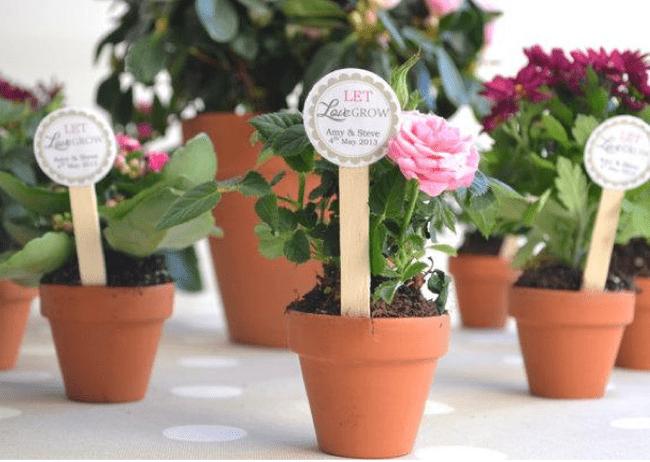 Plantitas y cactus para tus recuerdos originales de boda