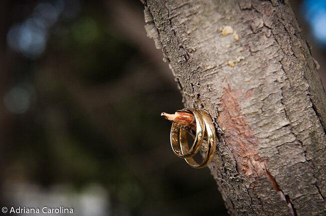 Anillos en un árbol. Foto: Adriana Carolina