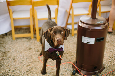 Tendência pet: casamento entre cães com tudo que os noivos têm direito