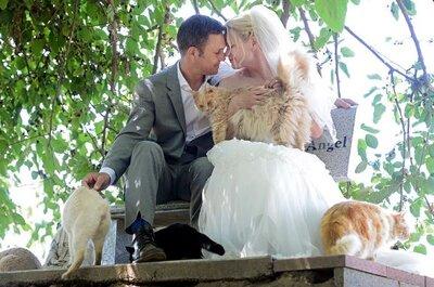Ce couple s'est marié au milieu de plus de 1000 chats!