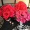 Detalhes cor de rosa na mesa do seu casamento. Foto: Holly Chapple