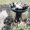 Hochzeits-Catering: Brunnen mit Getränken, Foto: Jacquelyn Poussot