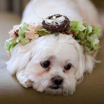 Cute doggies make the best ring bearers!