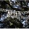 Decoraciones de papel para tu boda - Foto Curtin Photography