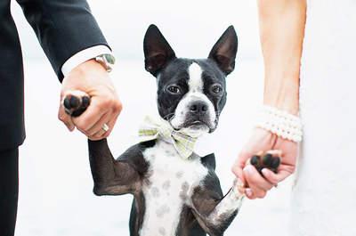 ¿Llevarías tu mascota a tu matrimonio? Déjala participar y dale un toque especial a tu celebración
