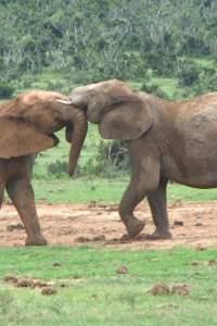 Hochzeitsreisen nach  Afrika planen