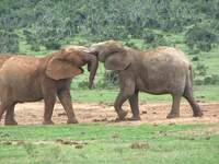 Hochzeitsreisen nach  Afrika planen - kompetent beraten bei Madiba.de