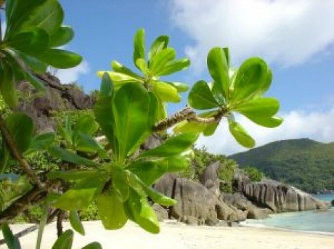 Quoi de plus romantique que de passer sa lune de miel aux Seychelles ?