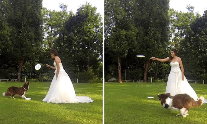 Wedding dogsitter Varese