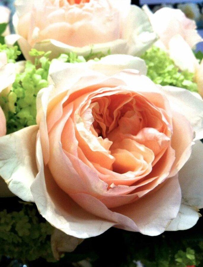 Rose Juliet - Bouquet de mariée Lily Griffiths