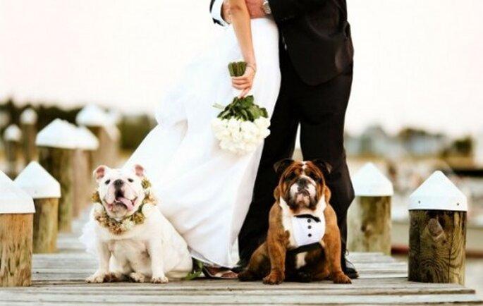 Disfruta de la compañía de tus perros durante la sesión de fotos de tu boda - Foto Joe Mikos