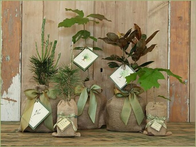 Una pianta come bomboniera a simboleggiare l'amore fecondo. Foto www.fairyandfairy.eu