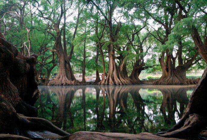 Foto: Lago de Camécuaro