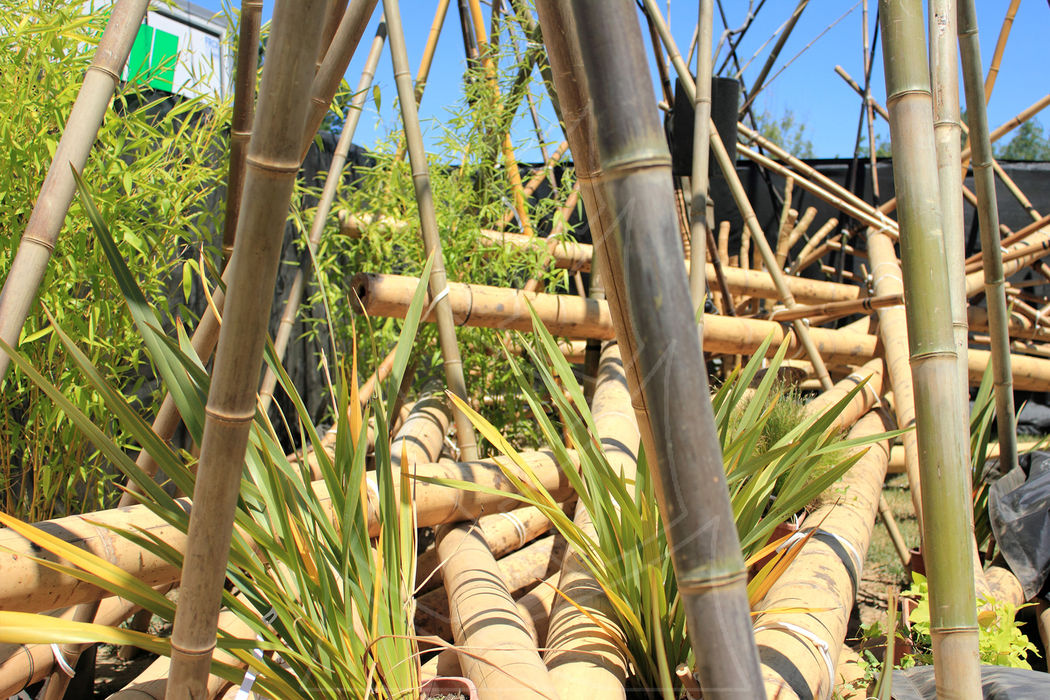Bambouctou