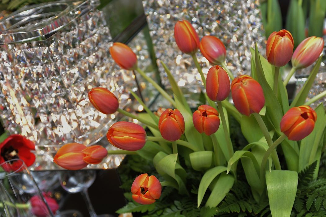 LOVE TULIPS Decoration and wedding planner project