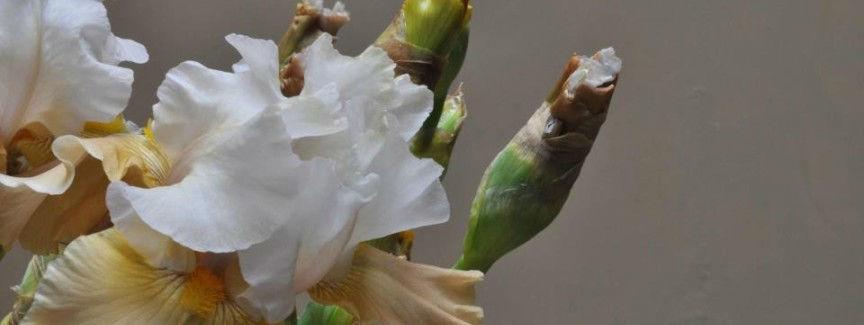 Beispiel: Blumenschmuck, Foto: Blumen von Steiner.