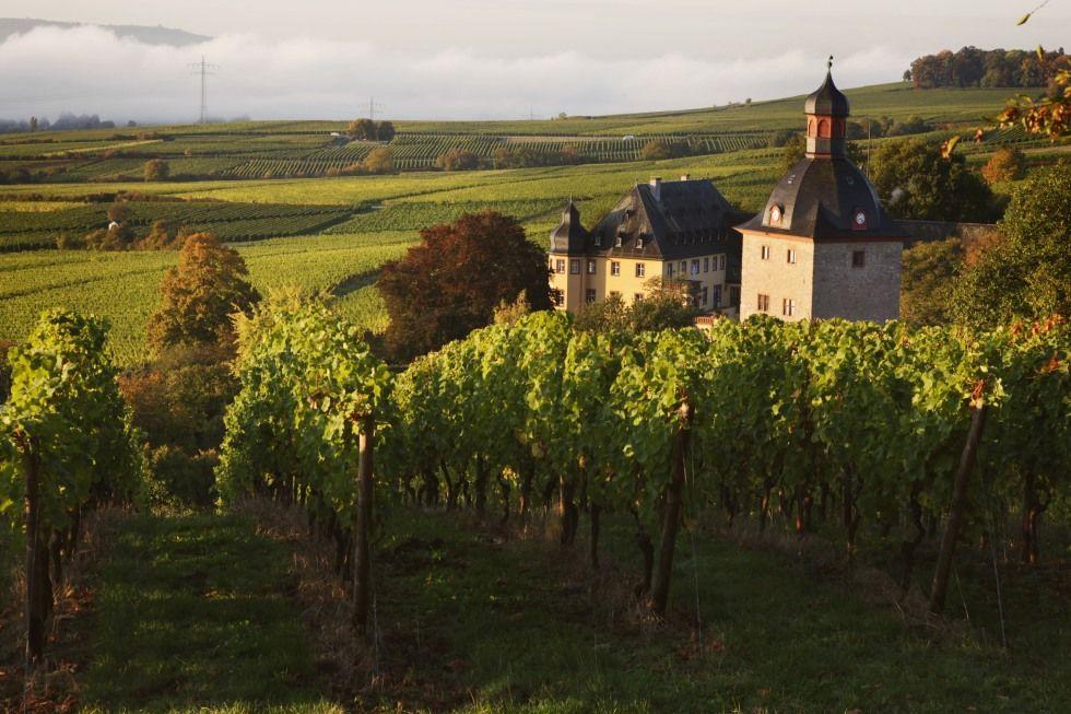Gutsrestaurant Weingut Schloss Vollrads