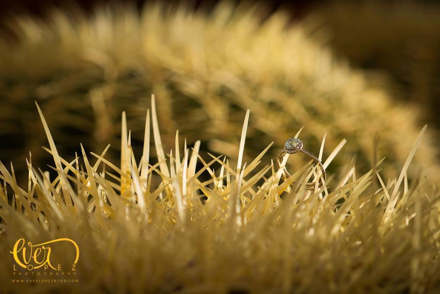 Foto de anillo de compromiso sobre cactus en boda Los cabos, Baja california sur.  Fotografia de boda por fotografo profesional de bodas Ever Lopez