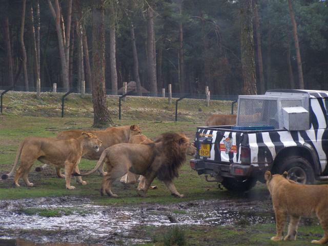 Avontuur voor jong en oud Safaripark Beekse Bergen