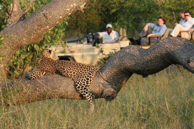 Sudafrica - Safari nel Parco Kruger -
