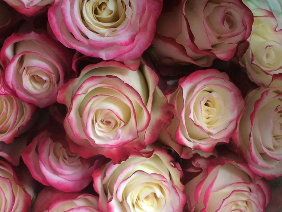Rosas Importadas