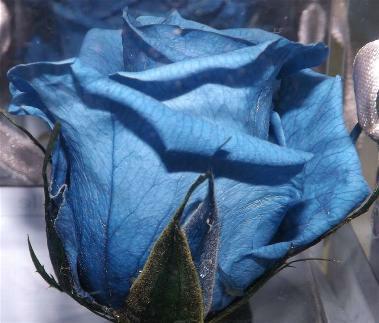Estudio Floral Amorebieta