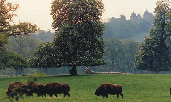 Beispiel: Schloss in der Natur, Foto: Dornröschenschloss Sababurg.
