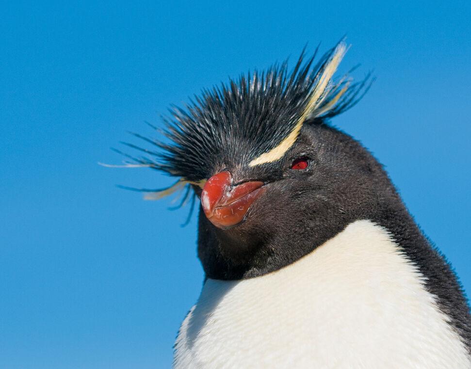 Argentina  - Pinguini Penisola Valdes -