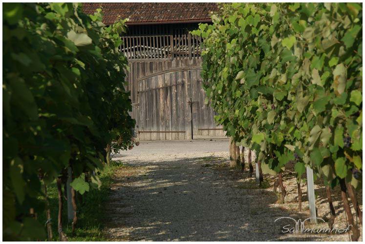 Beispiel: Vorgarten, Foto: Sallmannhof.