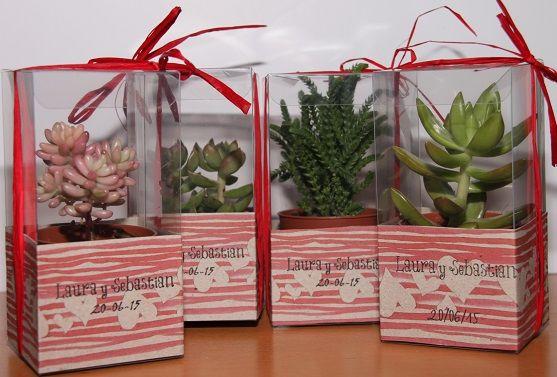 Plastas suculentas o crasas en caja de plástico personalizada con etiquetas decoradas con dibujos propios