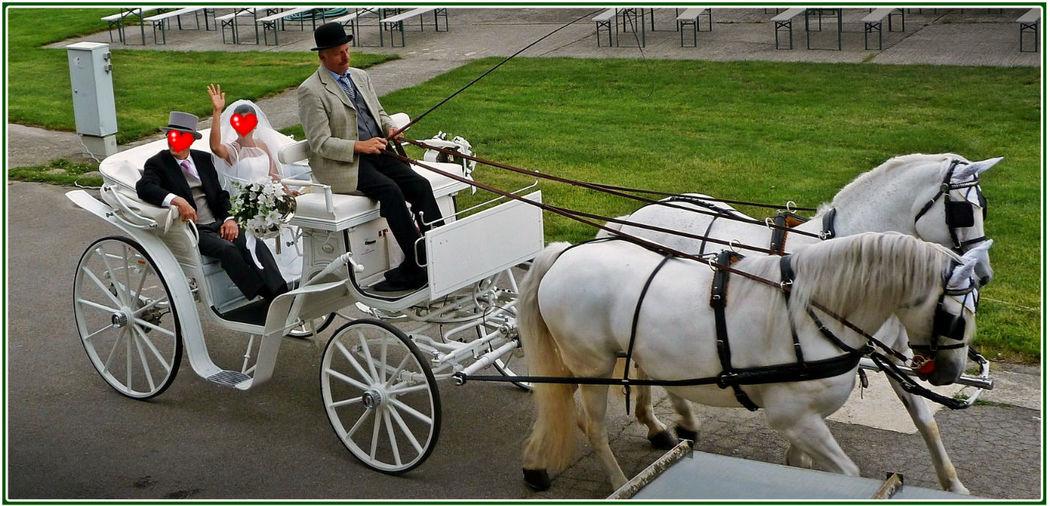 Möchten auch Sie mit der Kutsche zur Hochzeit fahren? Foto: Zeitlose Zeremonie