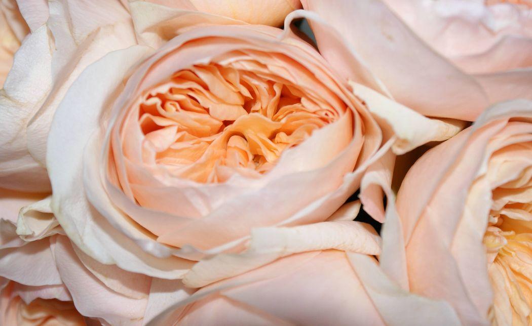#Nature Lodge #Brautstrauss #Brautstrauss englische Rosen #Brautstrauss lachs