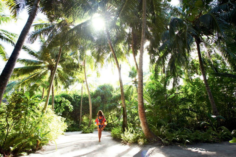 Palmen und Meer, LUX* Maldives