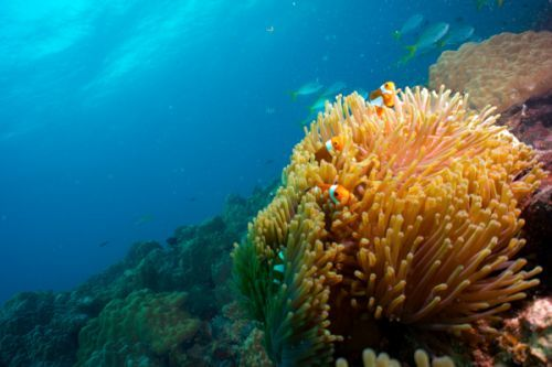 Unterwasserwelt in Malaysia
