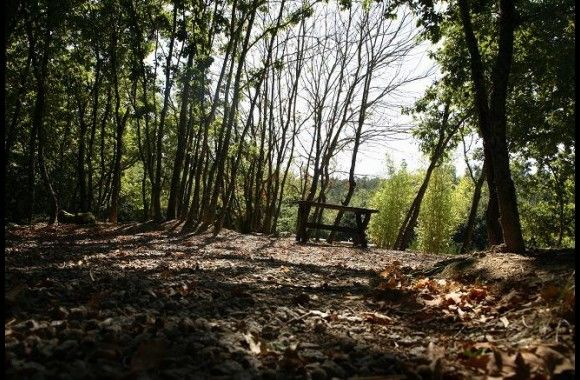 Foto: Quinta dos Bambus