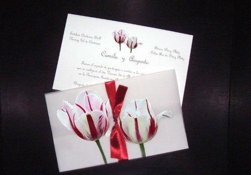 Flora Tulipanes