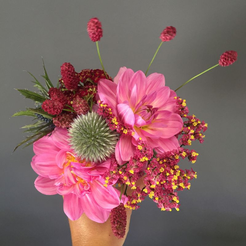 Camomille Flowers