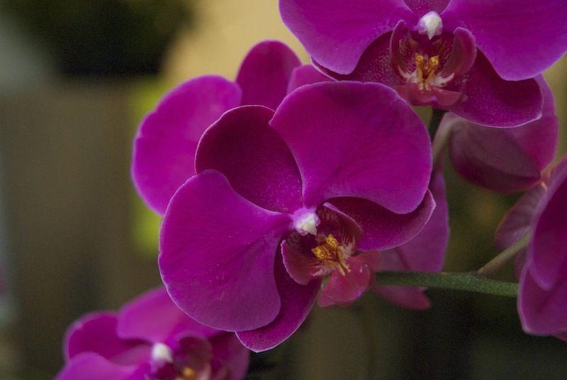 Beispiel: Schnittblumen, Foto: Durch die Blume.
