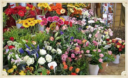 Beispiel: Ein traumhaft buntes Angebot, Foto: Blumen Biene.