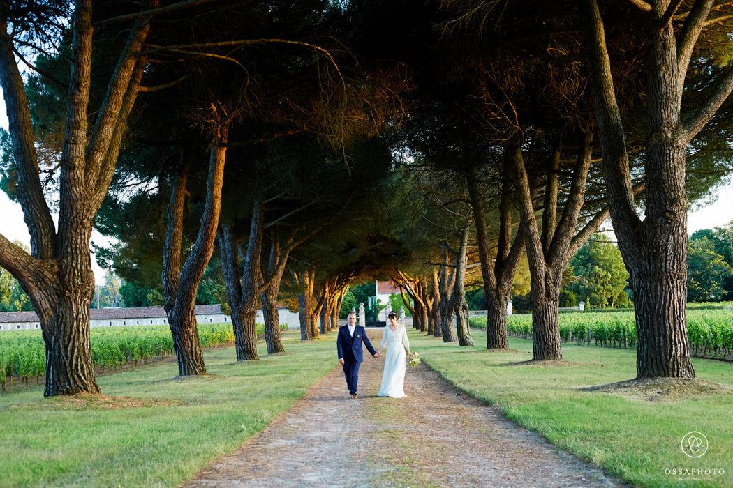 Allée de pins Château de La Dauphine