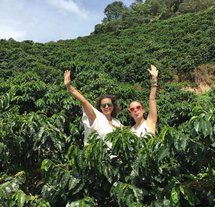 Trip del Café en finca cafetera - Antioquia Colombia