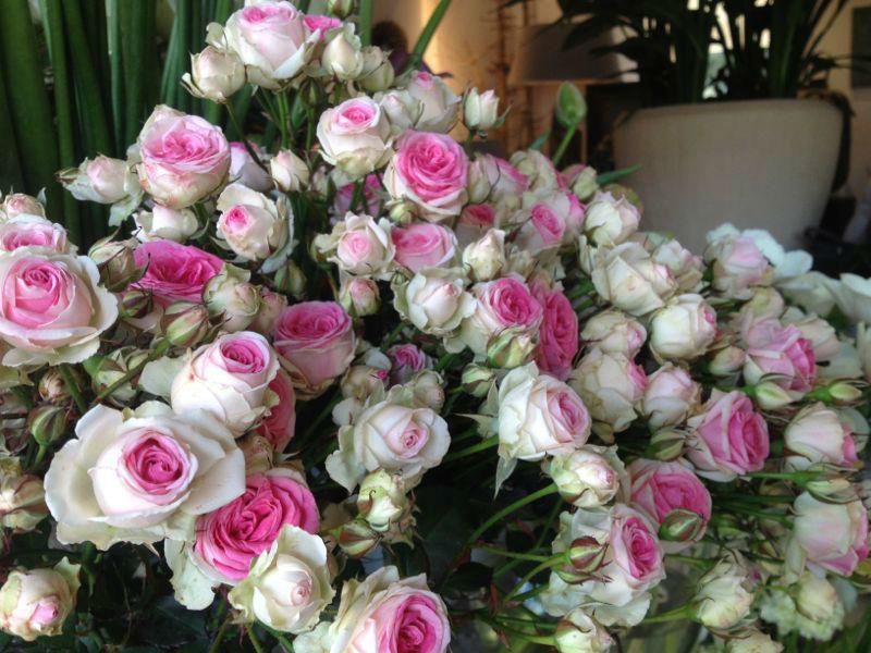 Beispiel: Traumhaft schöne Blumen, Foto: Puls Floristik.