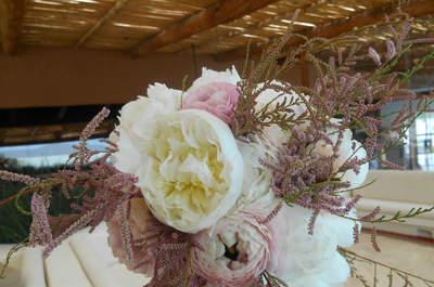 Proyectos Magnolia
