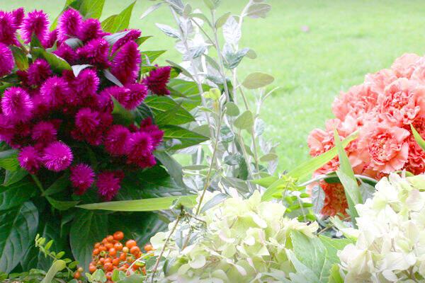 Greengrey - Flores