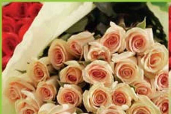 Rosas del Pinar