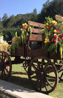 Catalina Corona Eventos y Flores