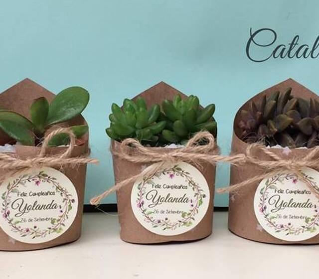 Mini macetas con plantas naturales